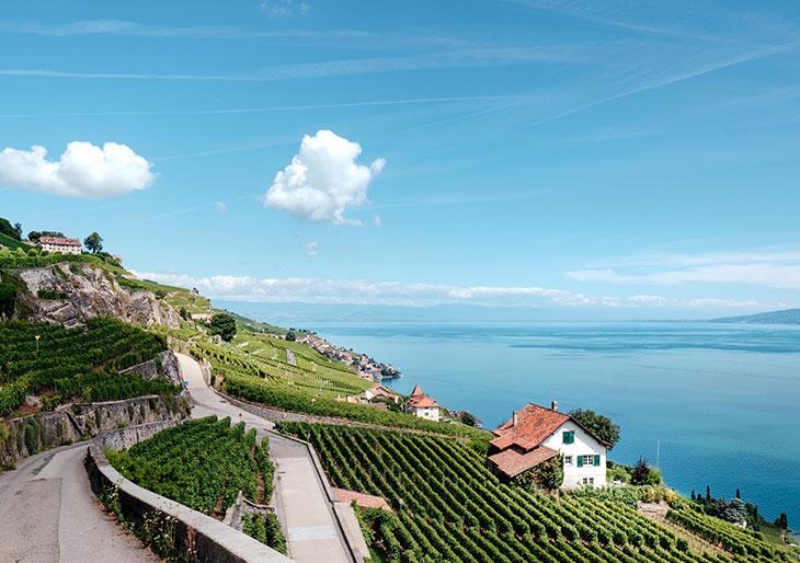 lausanne-wine-lavaux-vineyard
